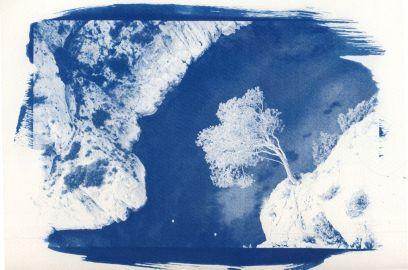 cyanotype-5