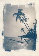 cyanotype-6