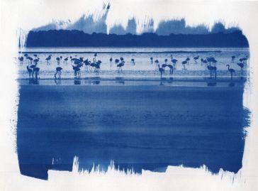 cyanotype-7