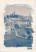 cyanotype-8